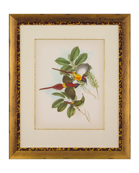 "John-Richard Collection ""Gould Birds of the Tropics I"" Giclee Wall Art"