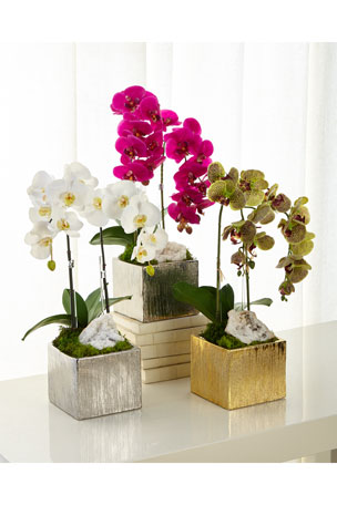 T&C Floral Company Orchids in Square Containers