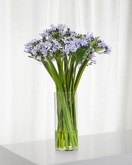 Winward Agapanthus in Glass Vase