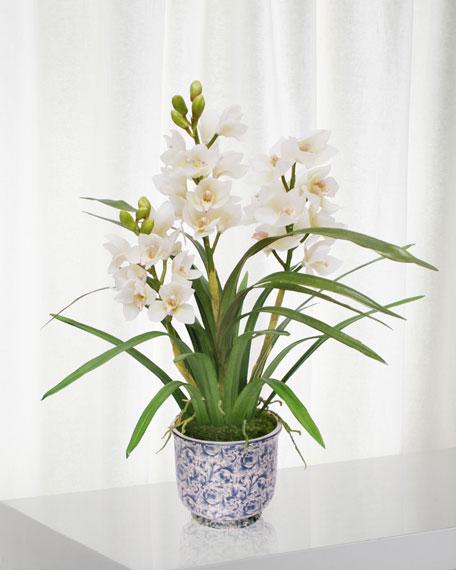 Winward Cymbidium Orchid in Cache Pot
