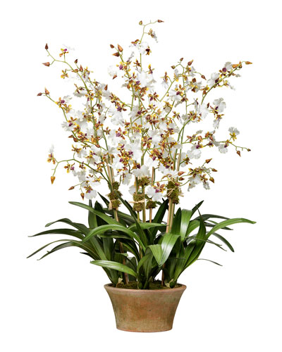 Cream Dancing Orchid in Terra Cotta Planter