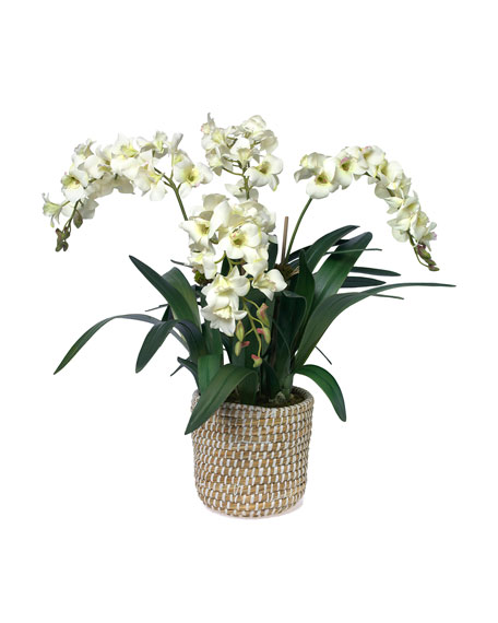 Diane James White Dendrobium Orchid in Woven Basket