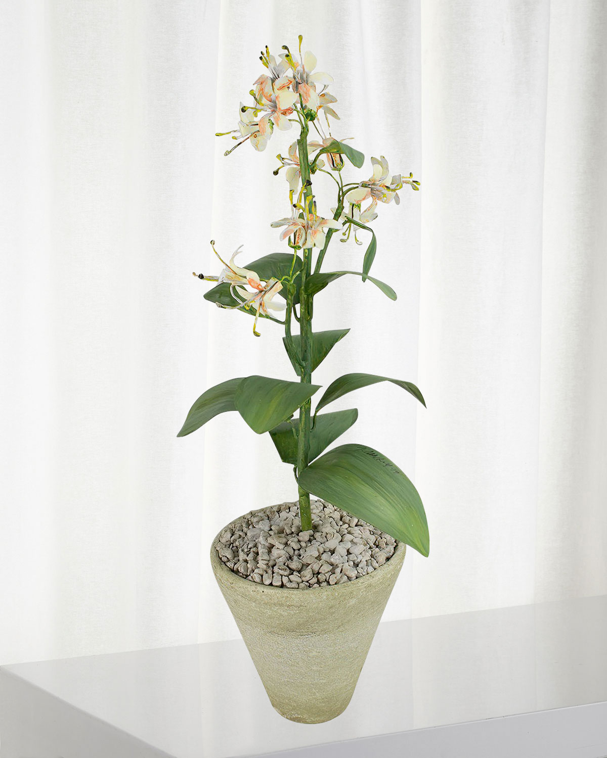 Charlotte Moss for Tommy Mitchell Honeysuckle June Birth Flower in White Terracotta Pot