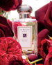 Red Roses Cologne