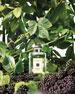 Jo Malone London Blackberry & Bay Cologne 1.0 oz./ 30 mL
