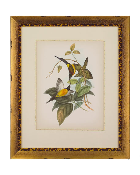 "John-Richard Collection ""Gould Birds of the Tropics II"" Giclee Wall Art"