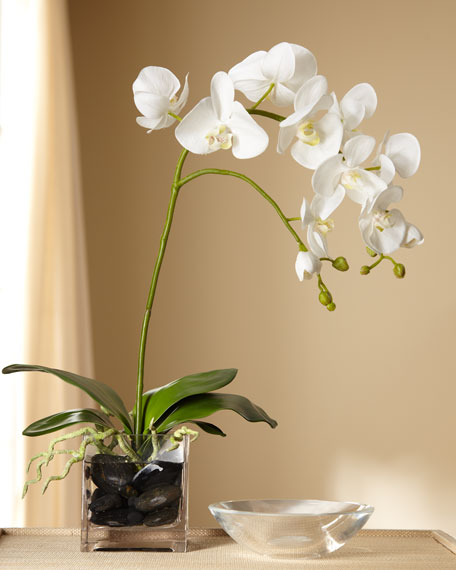 White Orchid in Clear Vase