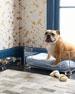 Acrylic & Brass Dog Bowl