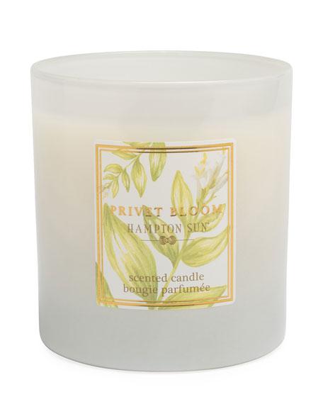 Hampton Sun Privet Bloom Scented Candle, 7.5 oz./ 215 g