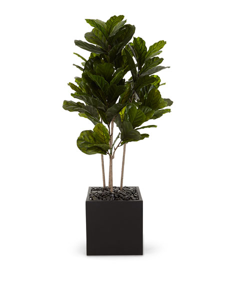 NDI Fiddle Leaf Bush in Cube
