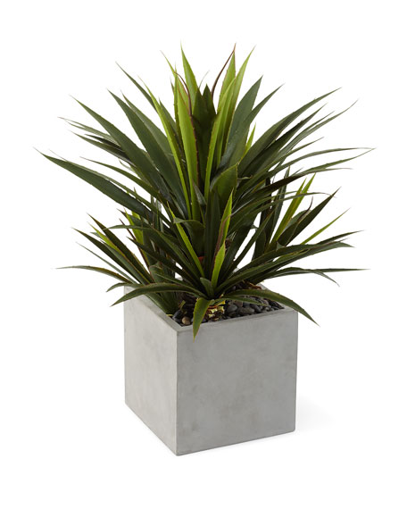NDI Aloe Plant in Concrete Finish Cube