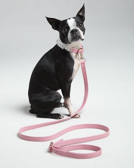 NM + Target Pet Collar & Leash