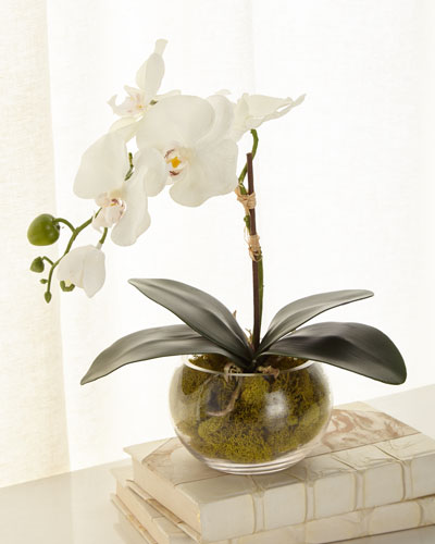 Petite Orchid Phalaenopsis