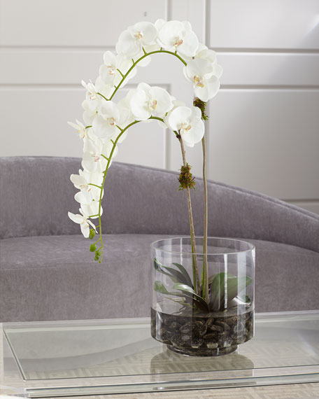 Orchid Phalaenopsis in Glass Container
