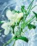 Guerlain Aqua Allegoria Herba Fresca Eau de Toilette, 4.2 oz. / 125 mL