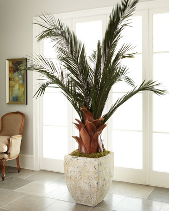 Oversized Palm in Planter