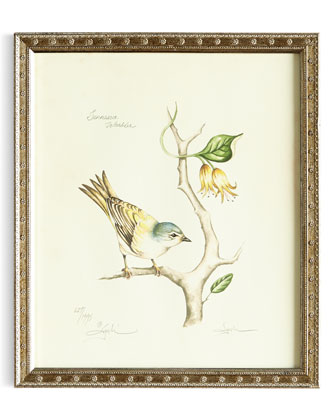 Tennessee Warbler Print