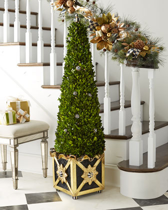 Gala Boxwood Tree