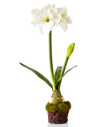 Amaryllis Faux-Floral Drop-Ins