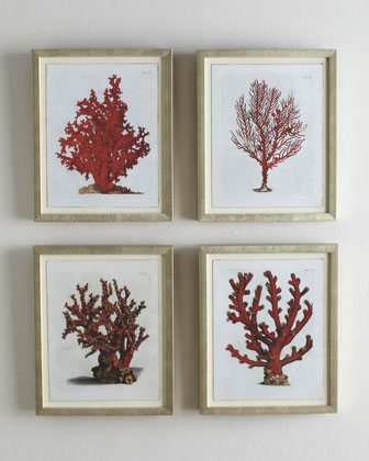 Red Coral A (Madrepore Coral) Print